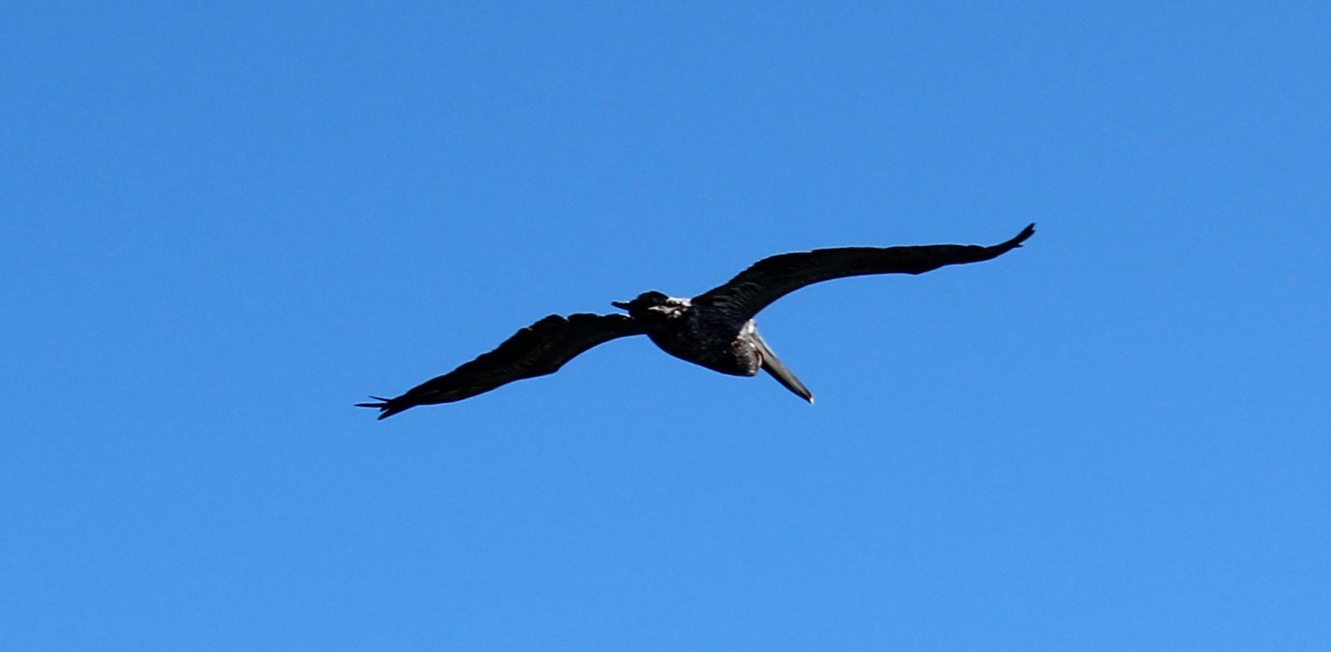 Bird in flight-2